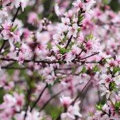 福建新东方烹饪学校:在那桃花盛开的地方
