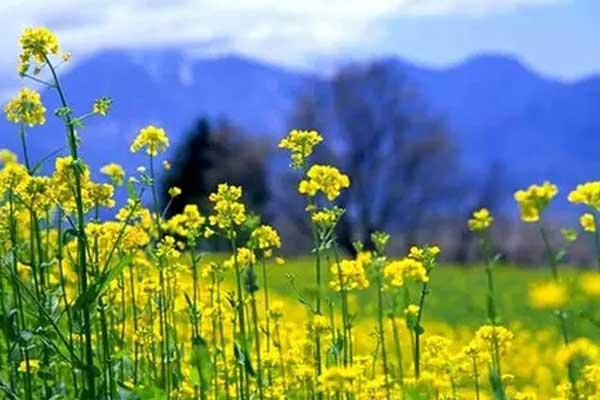 致新生:福州春季赏花攻略